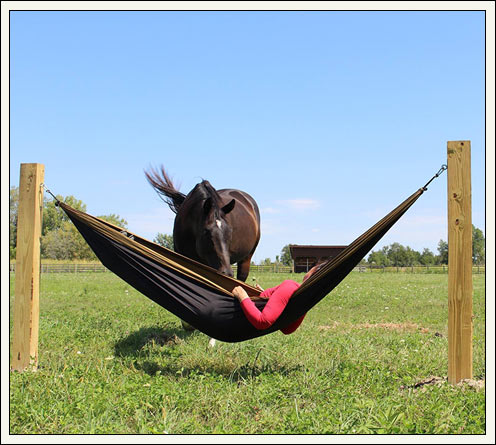 Person laying in a hammock in a pasture