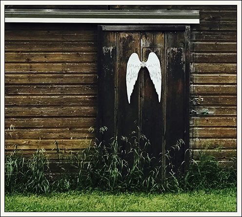 White wings on barn wall