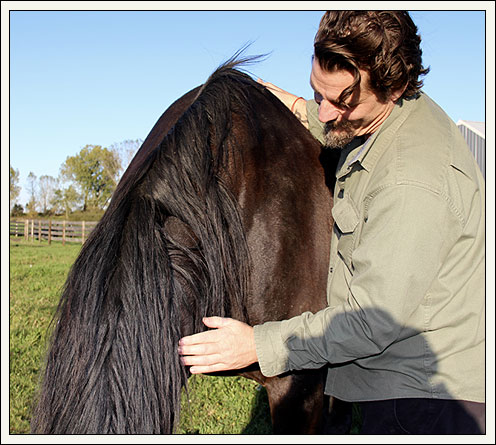 Man and horse in coaching session
