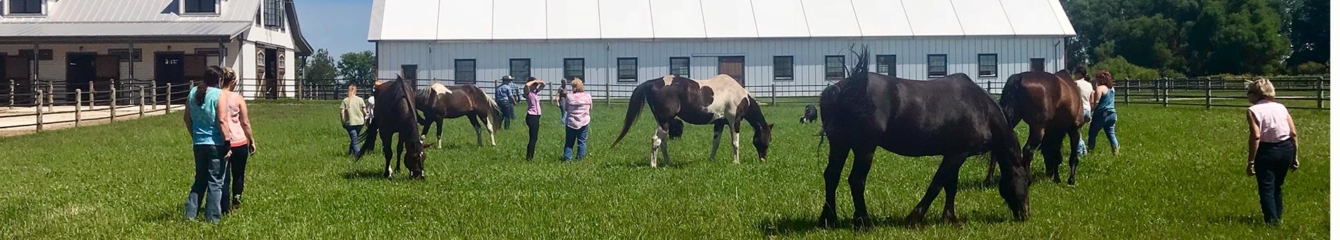 Horses in pasture with people